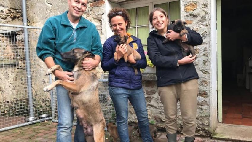 معهد فرنسي يستخدم حاسة الشم لدى الكلاب للكشف عن سرطان الثدي