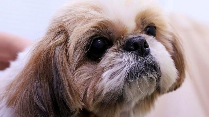 دفن كلبة مع صاحبتها تنفيذاً للوصية!!