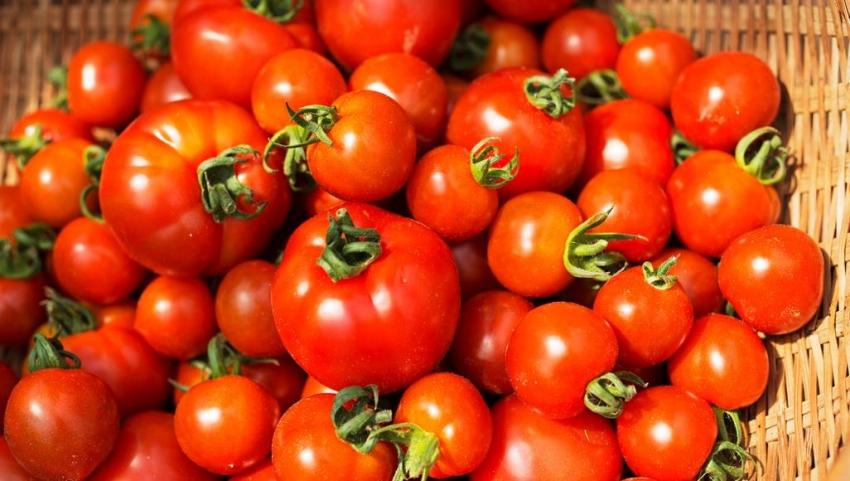 منها مكافحة تصلب الشرايين والسرطان.. 5 فوائد للطماطم