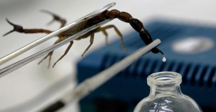 من خلال سم العقارب.. مساع علمية لعلاج الأورام الدماغية