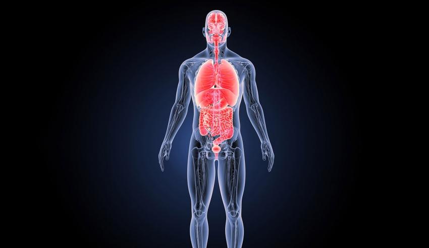 13 عضوا في جسم الإنسان يمكن العيش بدونها