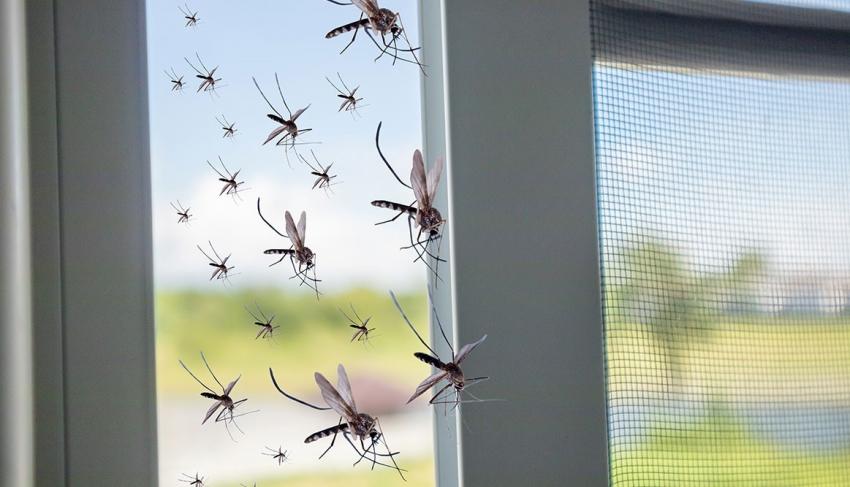 6 وصفات طبيعية تطرد الحشرات من البيوت